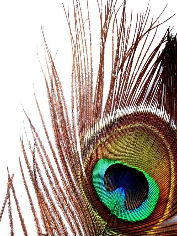 Olho do pavão - detalhe imagem de stock royalty free