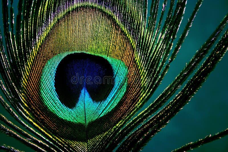 Olho do pavão - detalhe foto de stock