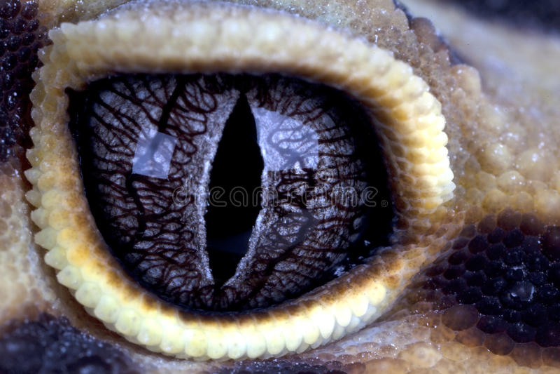 Olho dos Geckos foto de stock