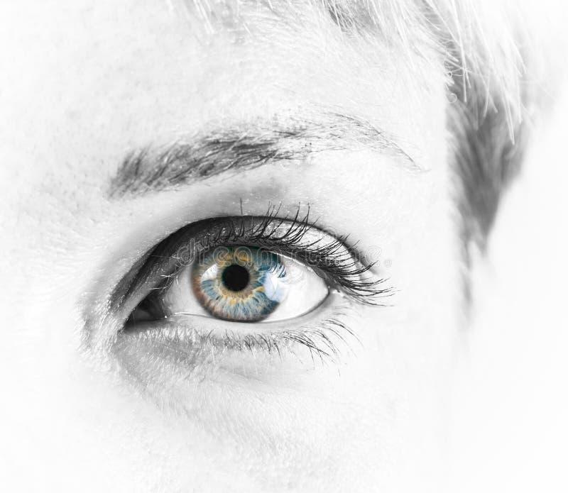 Olho fêmea bonito foto de stock