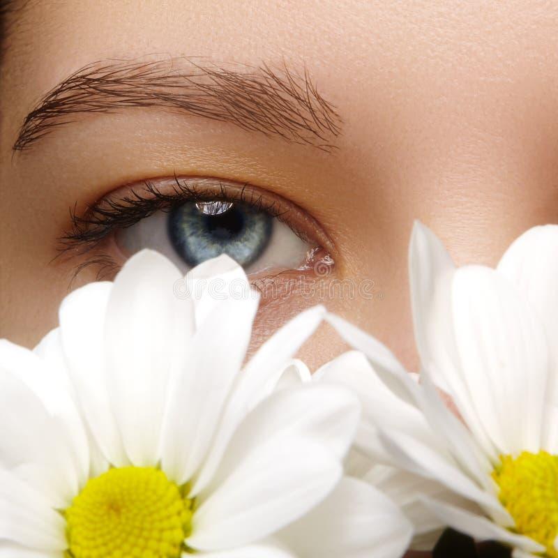 Olho fêmea bonito Limpe a pele, composição natural da forma Boa visão Olhar natural da mola com flores da camomila imagens de stock