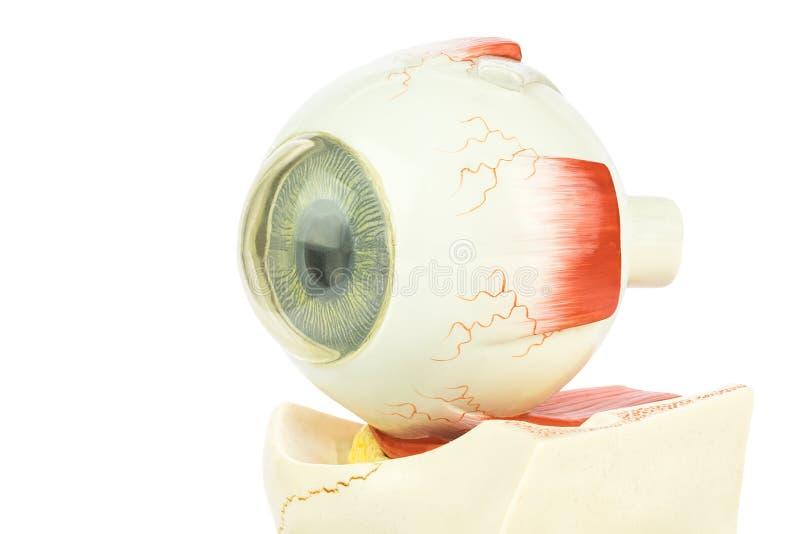 Olho humano artificial imagens de stock