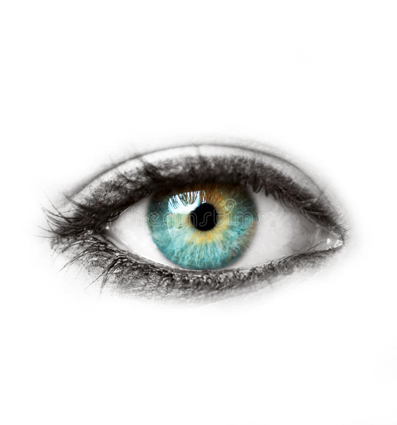 Olho humano azul bonito isolado no tiro macro branco foto de stock