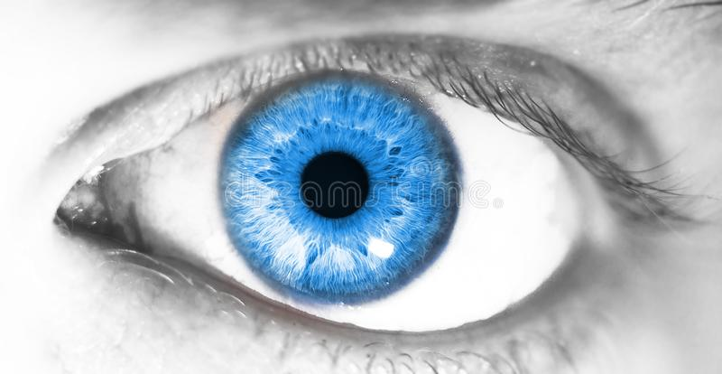 Olho humano bonito, macro, fim acima de azul, amarelo, marrom, verde fotografia de stock royalty free