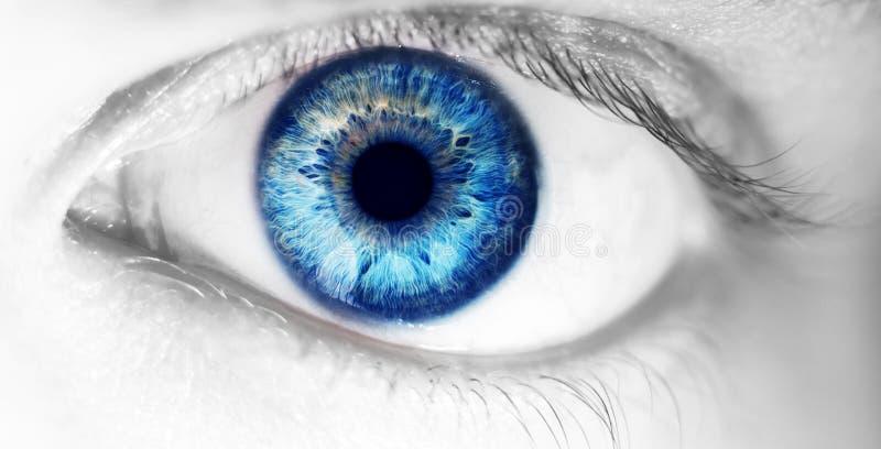 Olho humano bonito, macro, fim acima de azul, amarelo, marrom, verde fotos de stock