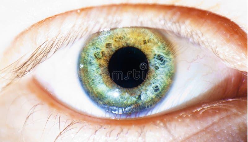Olho humano bonito, macro, fim acima de azul, verde, amarelo fotografia de stock