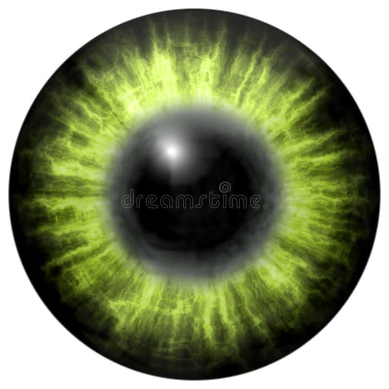 olho humano verde-claro com aluno médio e a retina escura Íris colorida escura em torno do aluno, opinião do detalhe no bulbo do  ilustração do vetor
