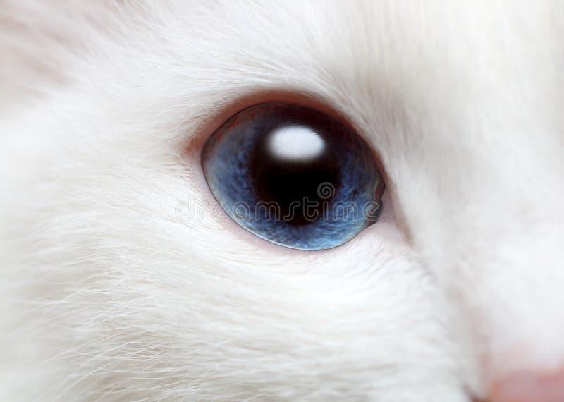 Olhos azuis do gato branco foto de stock royalty free