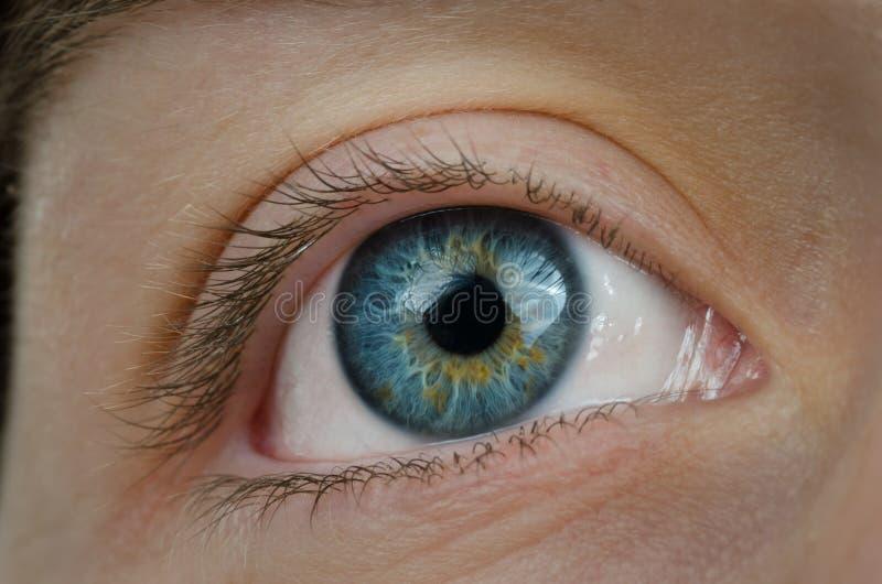 Olhos azuis surpreendentes. Imagem alta da definição. imagens de stock