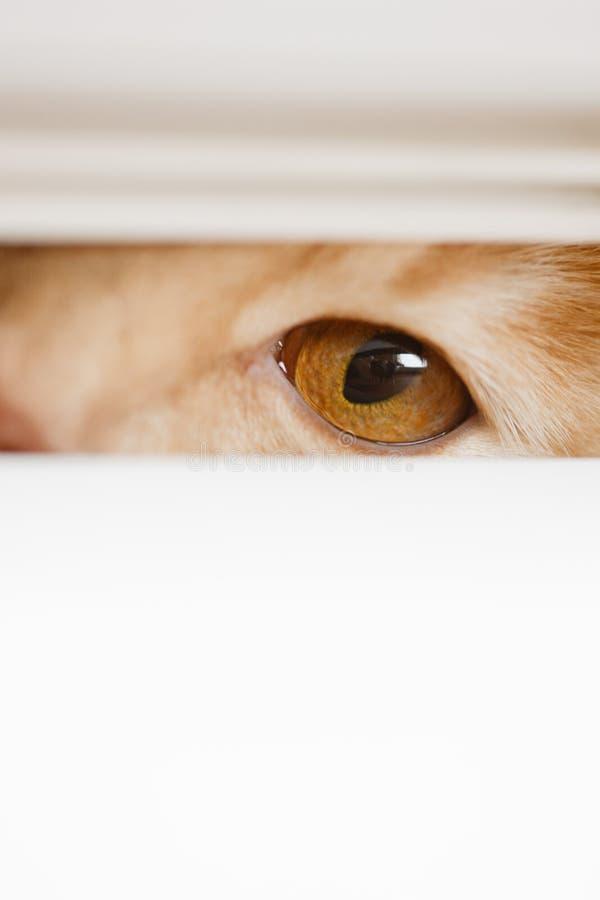 Olhos bonitos que olham sobre o gato fora do imagem de stock