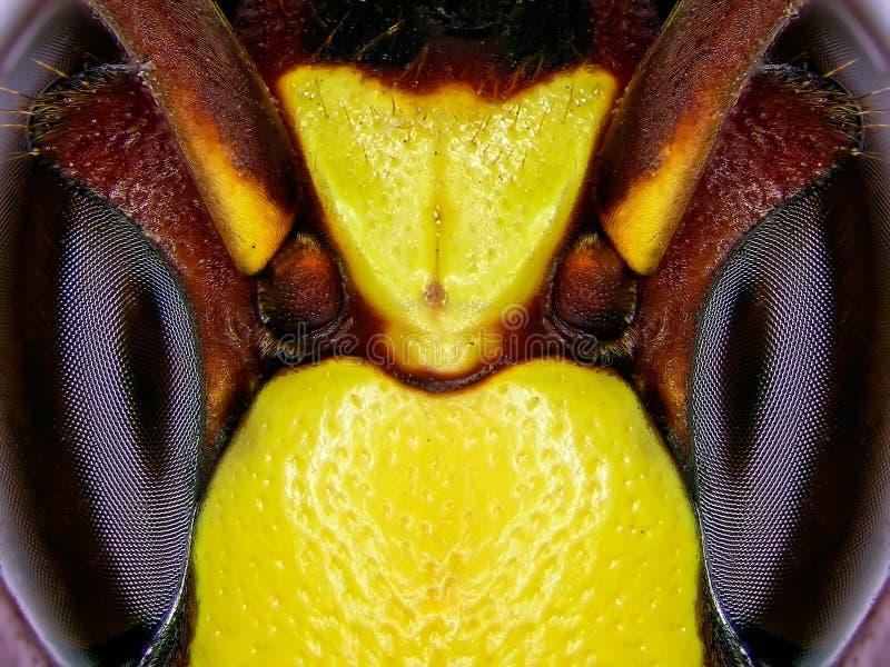 Olhos da abelha foto de stock