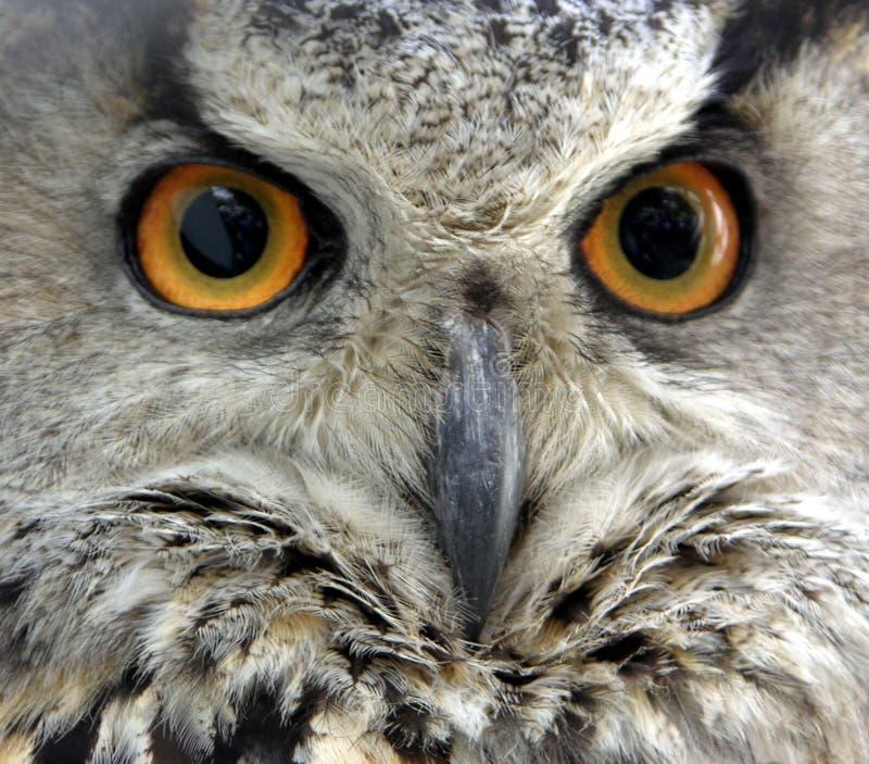 Olhos das corujas fotografia de stock