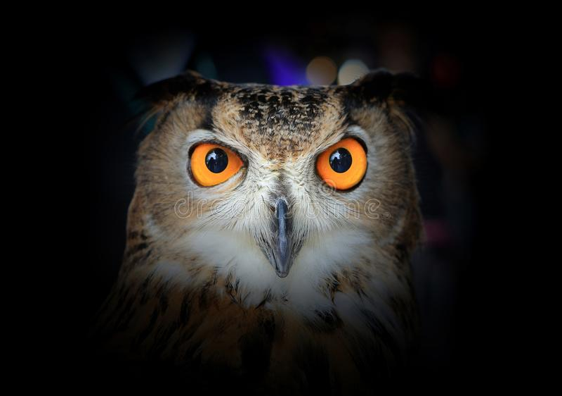 Olhos de Eagle Owl no fundo escuro fotografia de stock