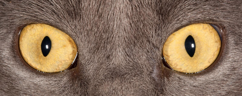 Olhos de gato foto de stock royalty free