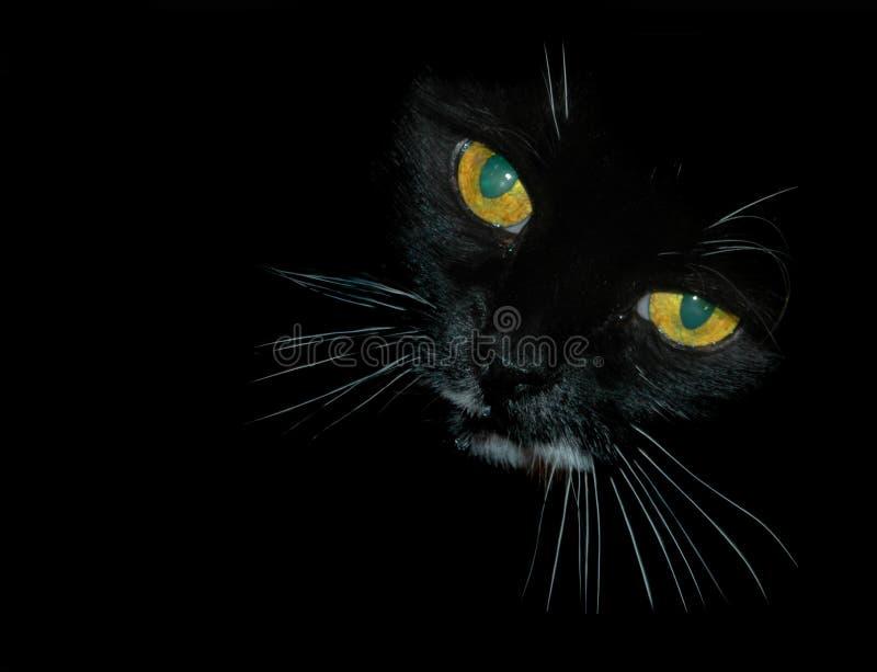 Olhos de gato perscrutando fotografia de stock