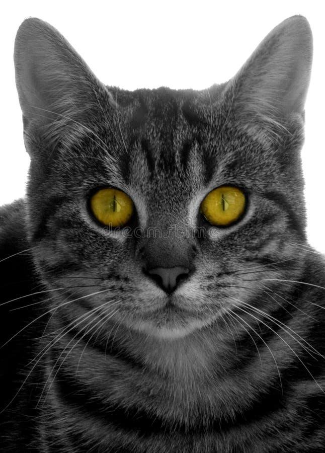 Olhos de gatos imagem de stock