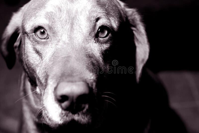 Download Olhos de um animal foto de stock. Imagem de emoção, sepia - 54308