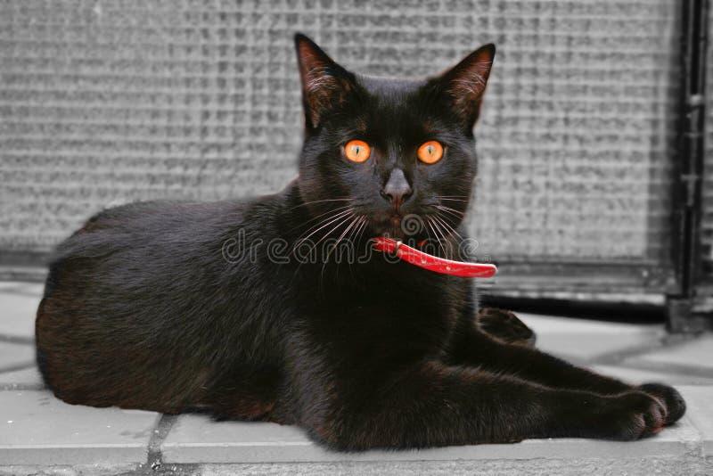 Olhos do âmbar do gato preto imagem de stock royalty free