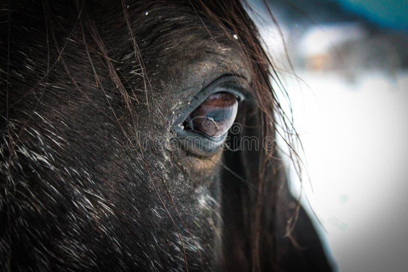 Olhos do cavalo imagens de stock royalty free