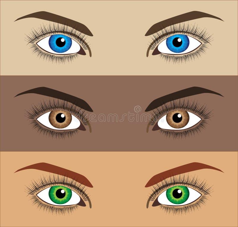 Olhos do vetor ilustração stock