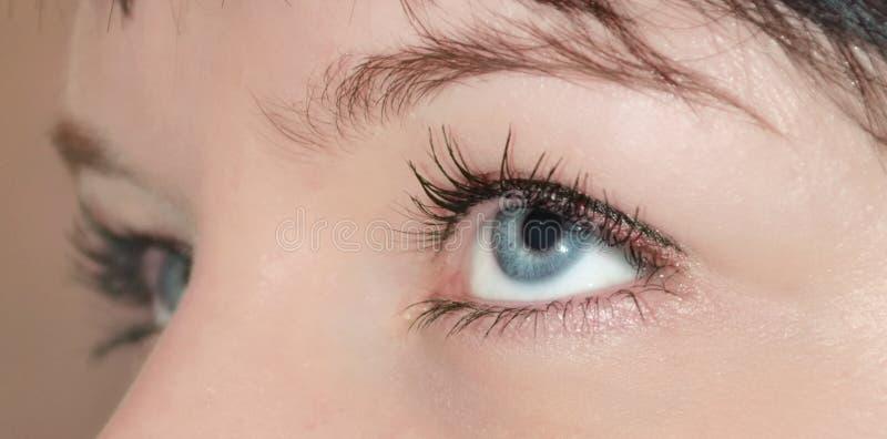 Olhos fêmeas fotografia de stock royalty free
