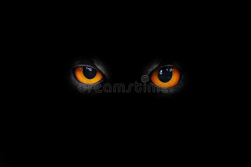 Olhos maus imagem de stock royalty free