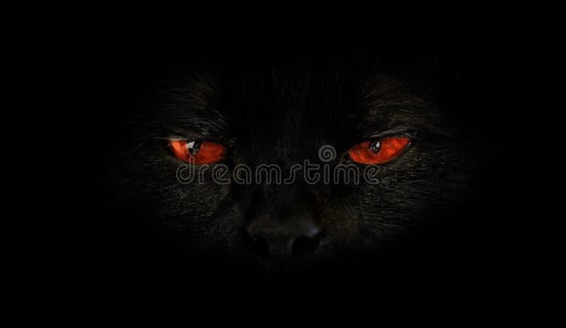 Olhos maus vermelhos do gato imagem de stock royalty free