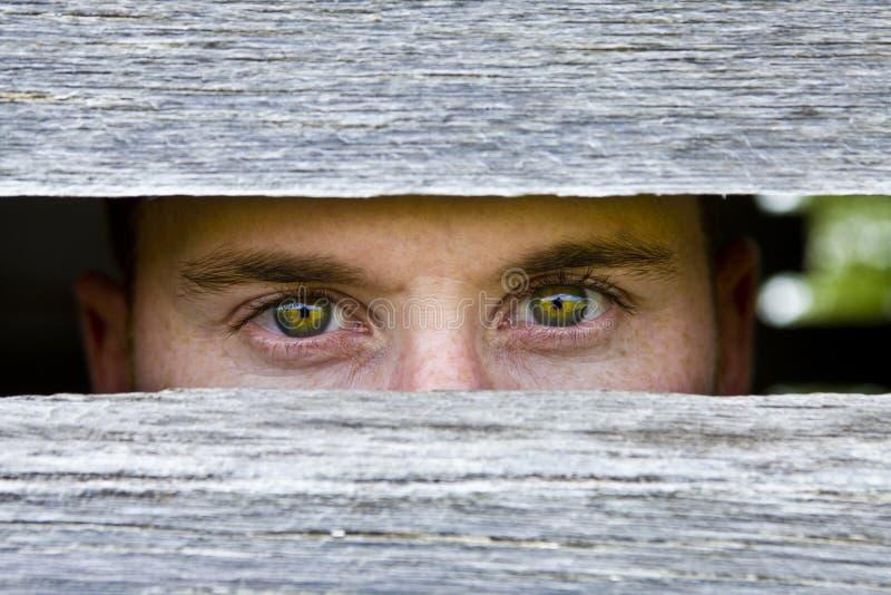 Olhos Piercing imagem de stock royalty free