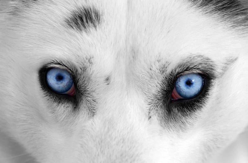 Olhos roncos imagens de stock