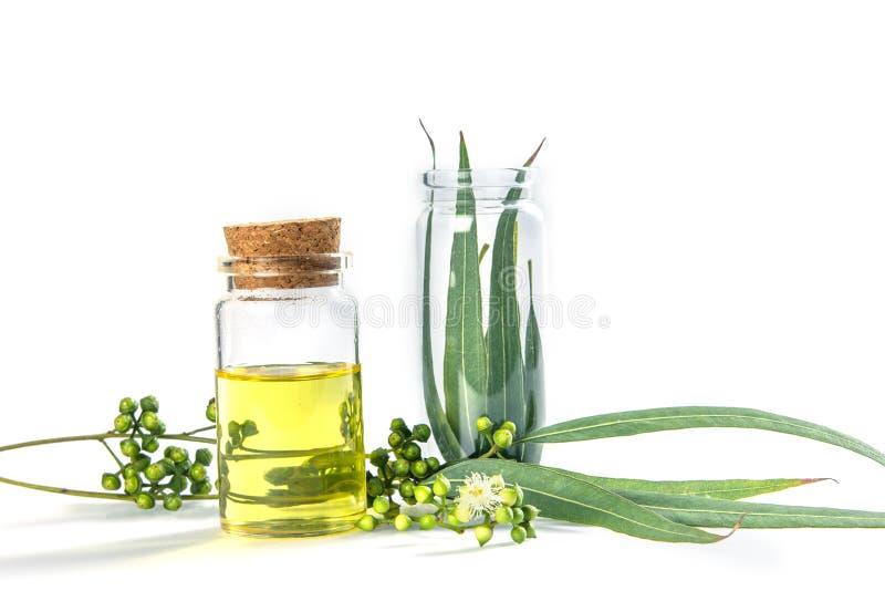 Oli essenziali dell'eucalyptus in bottiglia di vetro, di erbe oganic fotografie stock