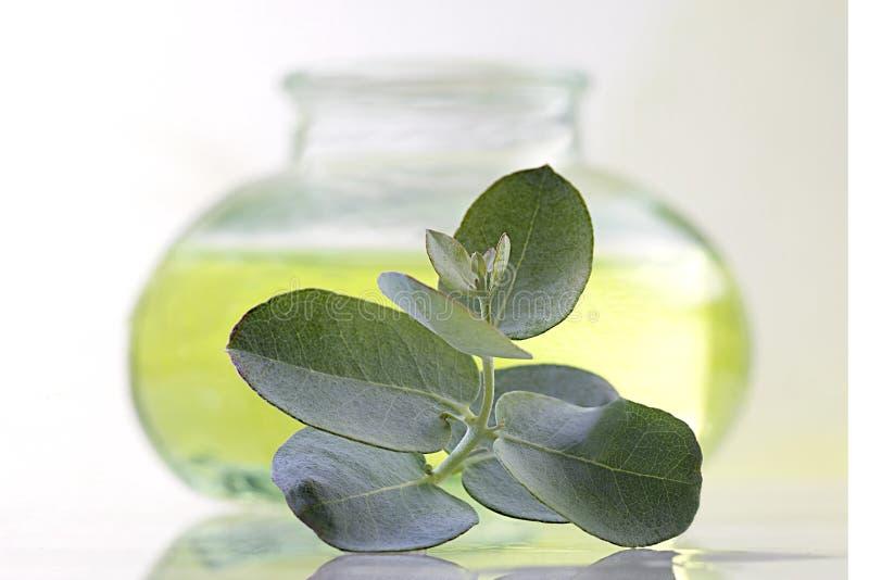 Olie en eucalyptusverlof stock foto's