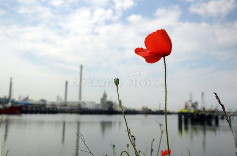 Olieraffinaderij met Poppy Rose royalty-vrije stock afbeelding