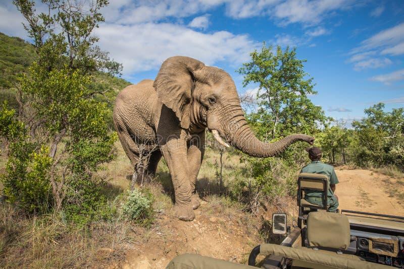 Olifant bij MKuze-Dalingen van Zuid-Afrika royalty-vrije stock afbeelding