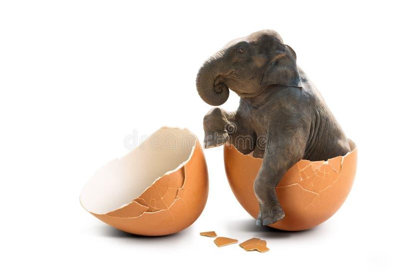 Olifant in eierschaal royalty-vrije stock afbeelding
