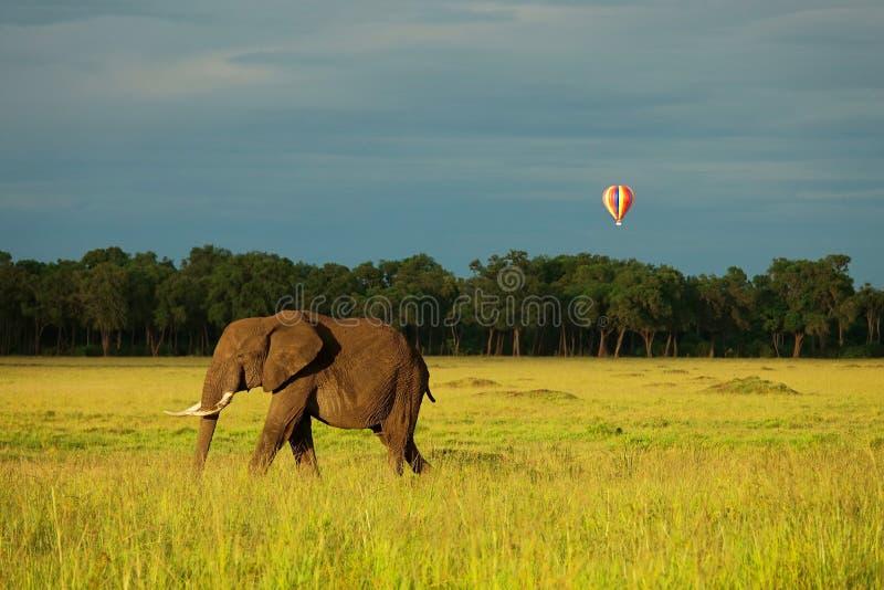 Olifant en ballon in Kenia royalty-vrije stock foto
