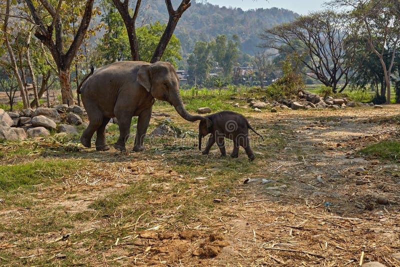 Olifant en haar kind stock afbeelding