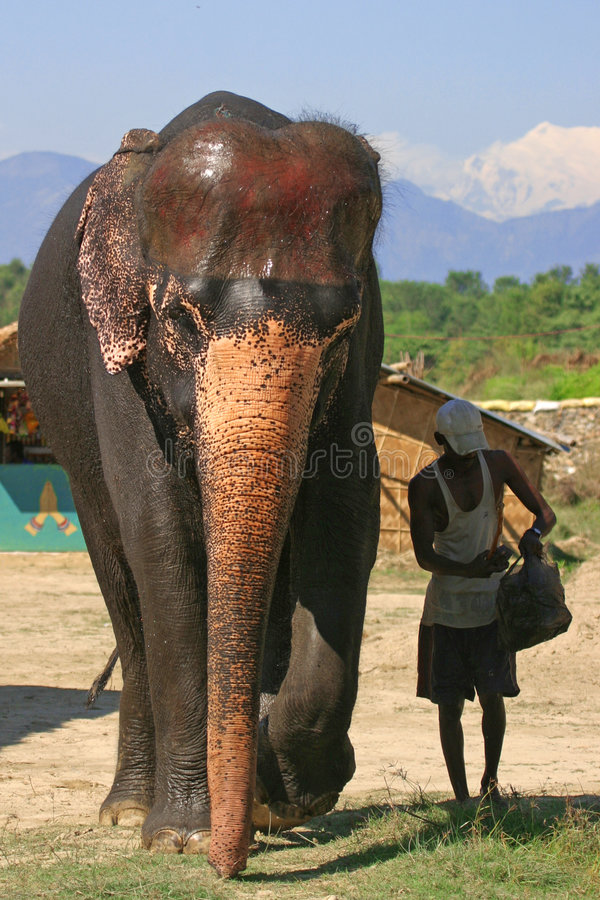 Olifant en mahout stock foto