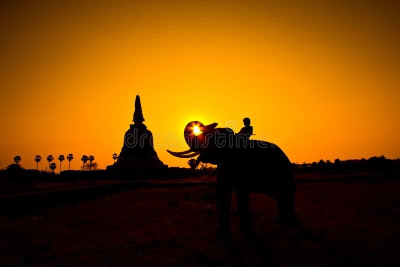 Olifant en Zonsondergang met zonsondergangscène royalty-vrije stock afbeeldingen