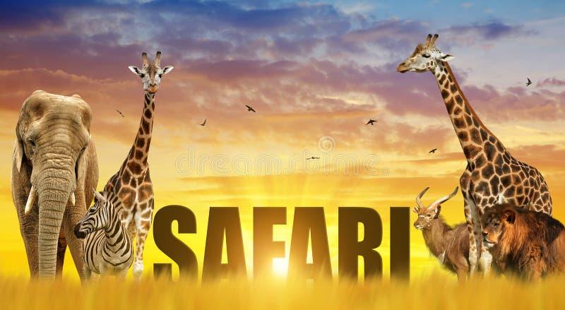 Olifant, giraffen, zebra en leeuw op de savanne bij zonsondergang royalty-vrije stock foto