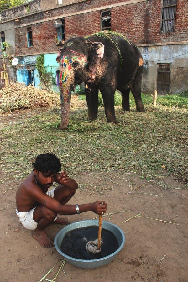 Olifant India royalty-vrije stock foto's