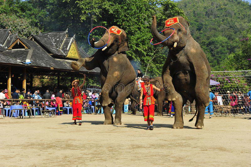 Olifanten als Toerist Attractionï ¼ China royalty-vrije stock foto