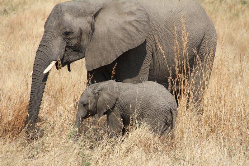 Olifanten bij het nationale park van Ruaha, Tanzania Oost-Afrika stock fotografie