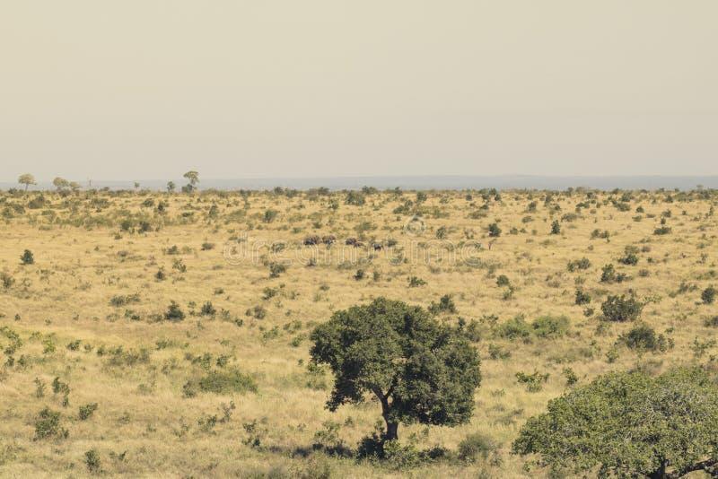 Olifanten in de afstand stock fotografie