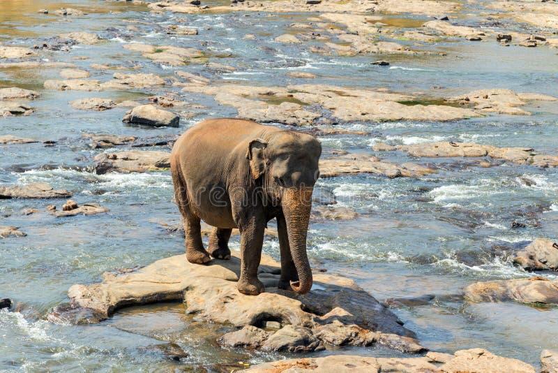 Olifanten in de rivier royalty-vrije stock foto's