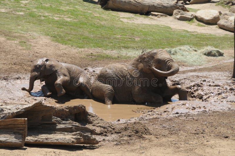 Olifanten die in de modder spelen stock fotografie