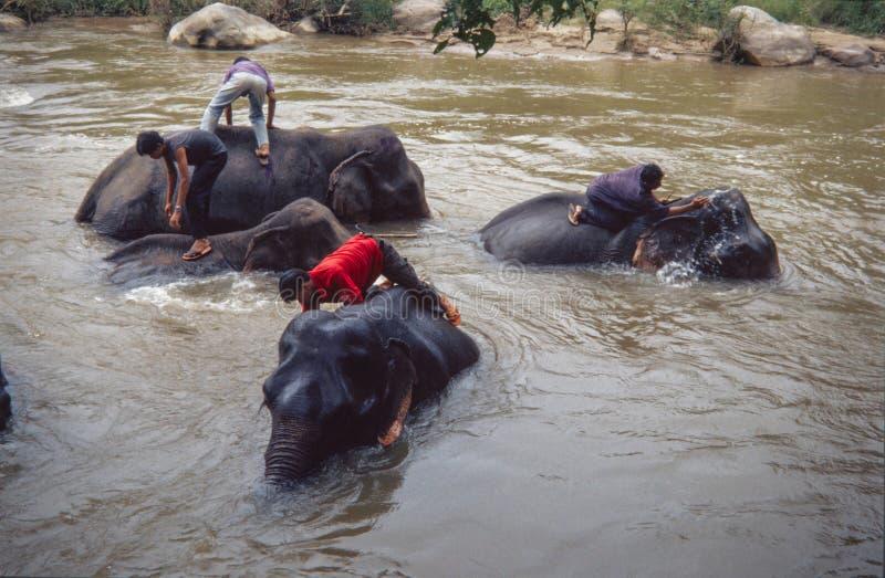 Olifanten die een bad met mahout in rivier, Chiang Mai Thailand nemen royalty-vrije stock afbeeldingen