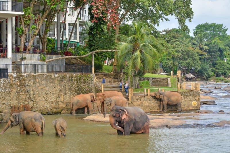 Olifanten die in een rivier dichtbij een hotel, Sri Lanka baden stock foto's