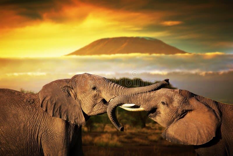 Olifanten die op savanne spelen. Zet Kilimanjaro op stock foto's