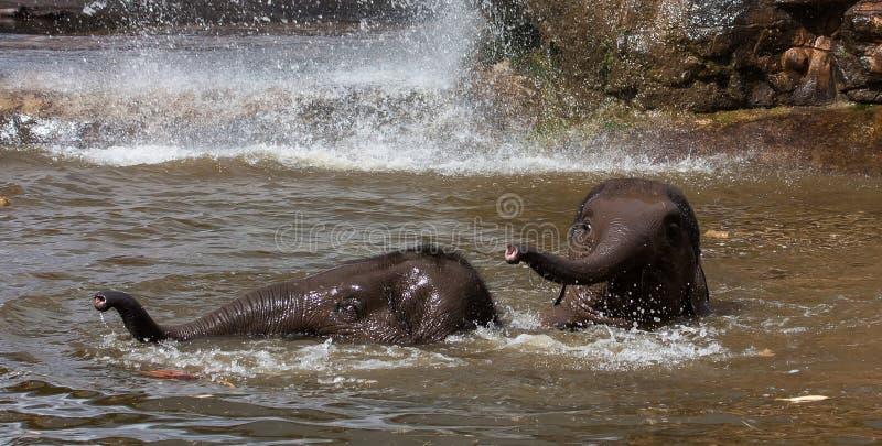 Olifanten die in water spelen stock fotografie