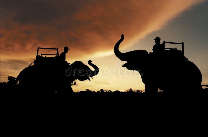 Olifanten en Zonsondergang royalty-vrije stock afbeeldingen